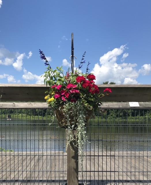 red flowers on bridge rail