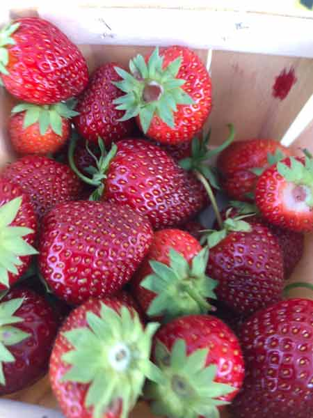 red strawberries at Farmer's Market